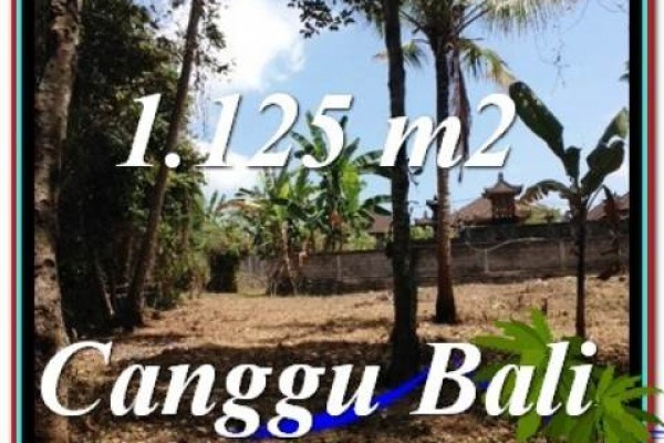 FOR SALE Affordable 1,125 m2 LAND IN CANGGU TJCG208