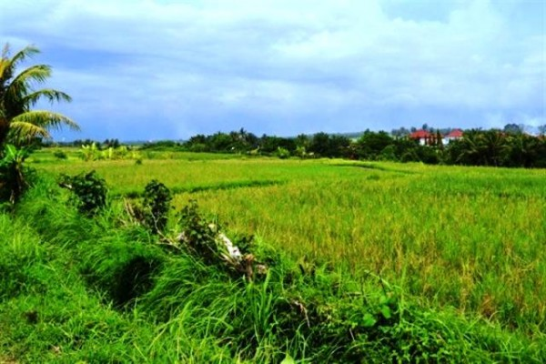 Terraced rice fields land for sale in Canggu – LCG010