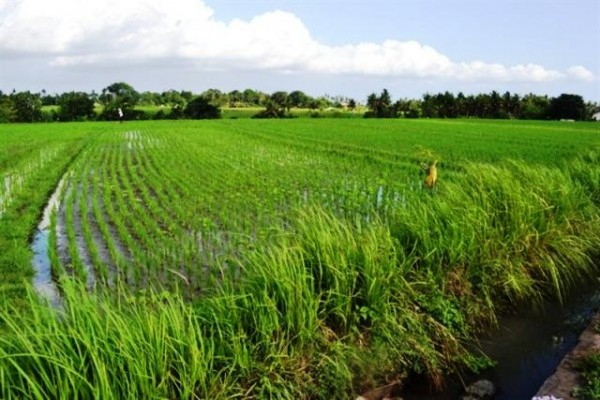Land for sale in Canggu Cemagi perfect for villa – LCG013