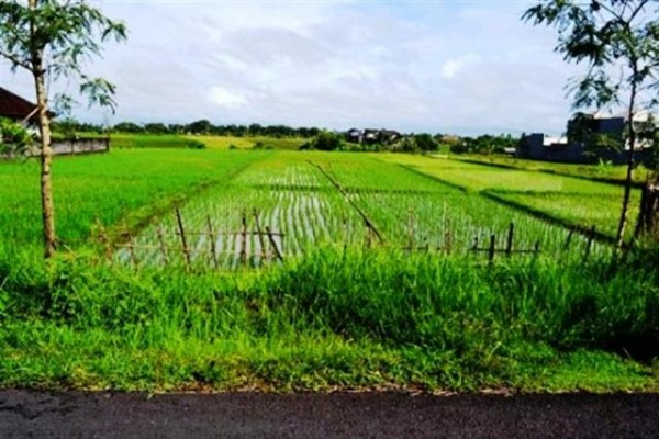 Land for sale in Canggu near to the beach and perfect view – LCG015