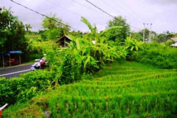 Land for sale in Canggu nice rice field view and strategic location – LCG018