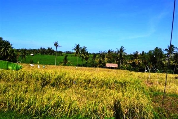 Land for sale in Canggu perfect view – LCG035 (SOLD)