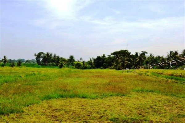 Land for sale in Canggu roadside with rice field view – LCG038