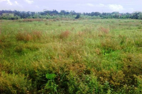 Land for sale in Canggu featuring rice field panorama – LCG044