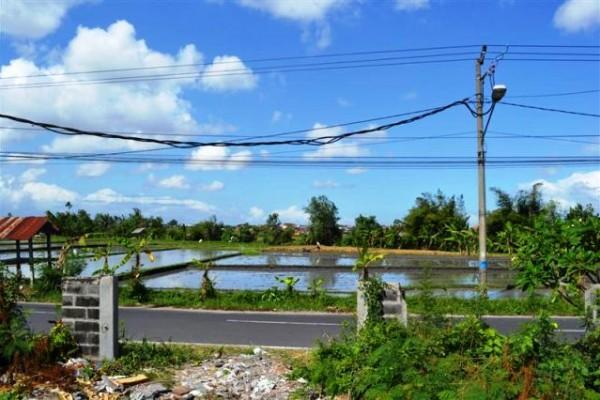 Land for sale in Canggu Bali on the roadside, bargain price – LCG049 (SOLD)