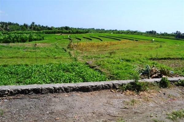 Land for sale in Canggu Bali suitable for villa with paddy field view – LCG056 (SOLD)
