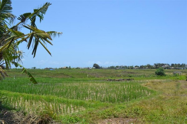 Land for sale in Canggu Bali with beautiful rice paddy view – LCG061