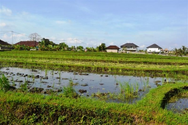 Land for sale in Canggu Magnificent view of rice fields – LCG072