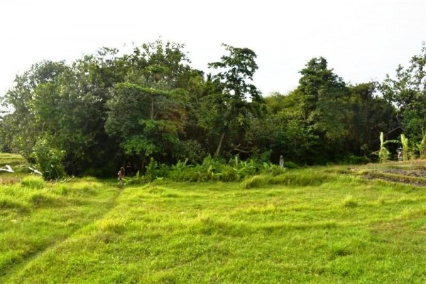 Land for sale in Canggu By the River close to the Beach – LCG073