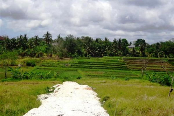 Land for sale in Canggu perfect for villa with rice paddy view – LCG075