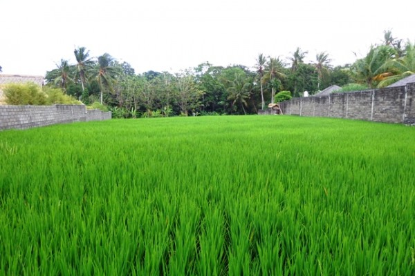 Land for sale in Canggu Bali with natural green field view – LCG051