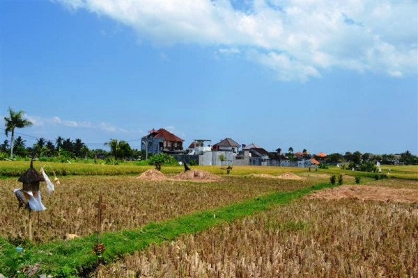 Land for sale in Canggu with rice field view on the roadside – LCG053