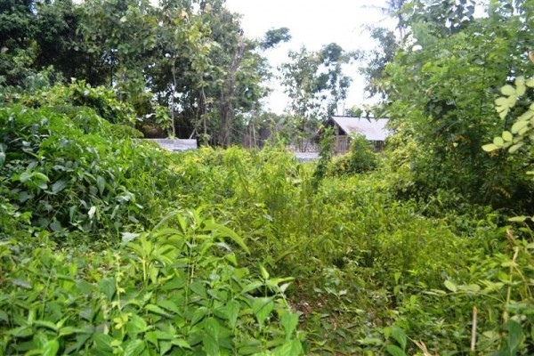Land for sale in Canggu Bali Suitable for villa  – TJCG100