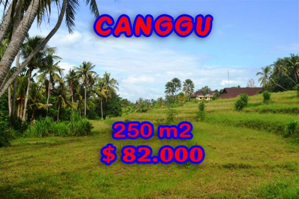 Land in Canggu for sale, Stunning view in Canggu Pererenan Bali – TJCG115
