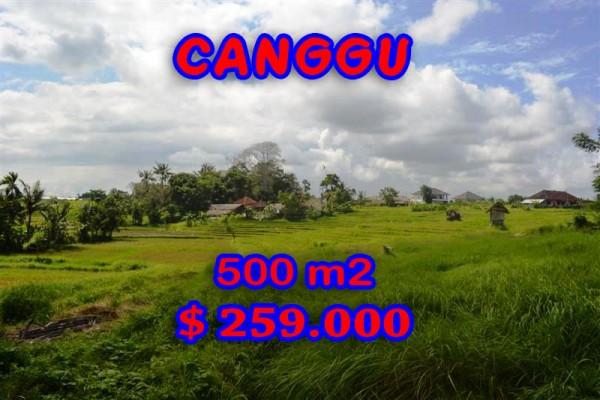 Interesting Land for sale in Canggu Bali, rice paddy view in Canggu Batu Bolong– TJCG116