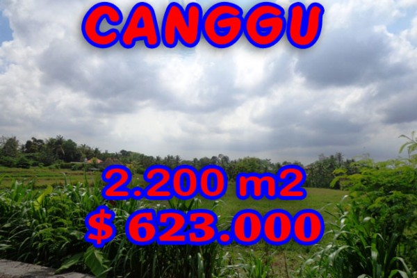 Land in Canggu for sale, Attractive view in Northern Canggu Bali – TJCG125