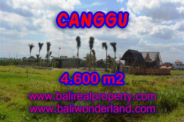 Exotic Property in Bali, Land for sale in Canggu Bali – 4,600 sqm @ $ 539