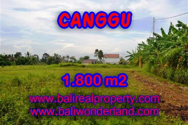 Fantastic Land for sale in Canggu Bali, Stunning view rice fields in Canggu Batu Bolong– TJCG134