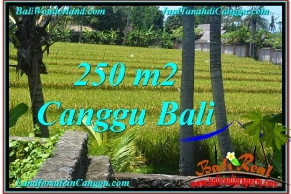 Magnificent PROPERTY 250 m2 LAND SALE IN Canggu Pererenan BALI TJCG207