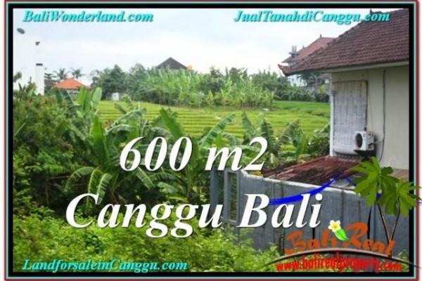 FOR SALE Affordable PROPERTY LAND IN Canggu Brawa BALI TJCG206