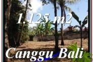 Beautiful PROPERTY 1,125 m2 LAND FOR SALE IN Canggu Pererenan TJCG208