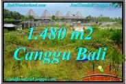 Beautiful LAND SALE IN Canggu Pererenan TJCG212