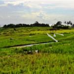 land for sale in canggu, bali LCG005