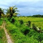 Land for sale in Canggu, Bali LCG010