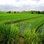 Land for sale in Canggu, Bali LCG013