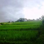 Land for sale in Canggu, Bali LCG018