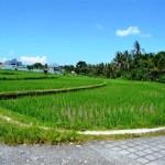 Land for sale in Canggu, Bali LCG028