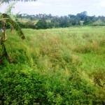 Land for sale in Canggu, Bali LCG044
