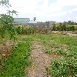LCG055 - Land for sale in Canggu Bali