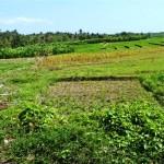 Land for sale in Canggu Bali - LCG056