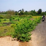 Land for sale in Canggu Bali - LCG059