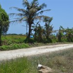 Land for sale in Canggu Bali - LCG061
