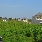 Land for sale in Canggu Bali - LCG068
