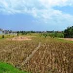 land for sale in canggu bali - LCG053