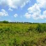 Land for sale in Canggu Berawa