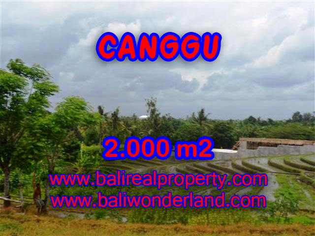 Land in Canggu for sale, Attractive view in Canggu Babakan Bali – TJCG133