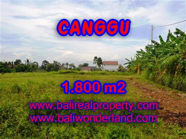 Fantastic Land for sale in Canggu Bali, Stunning view rice fields in Canggu Batu Bolong– TJCG134