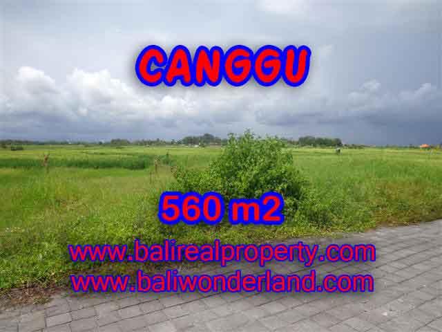 Land in Canggu for sale, Amazing view in Canggu Cemagi Bali – TJCG138