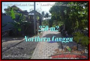 Exotic 250 m2 LAND SALE IN Canggu Pererenan BALI TJCG182