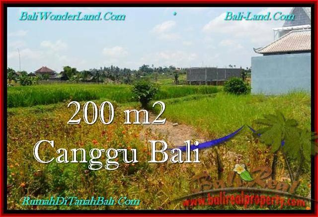 Affordable PROPERTY 200 m2 LAND IN Canggu Pererenan FOR SALE TJCG191