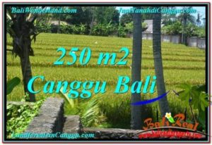 Magnificent PROPERTY LAND SALE IN Canggu Pererenan BALI TJCG207