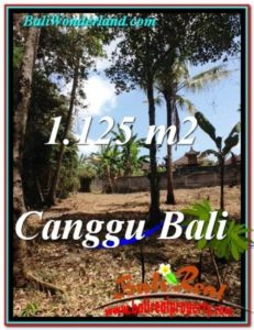 Exotic PROPERTY Canggu Pererenan BALI LAND FOR SALE TJCG208