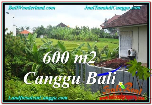 Magnificent 600 m2 LAND IN Canggu Brawa BALI FOR SALE TJCG206