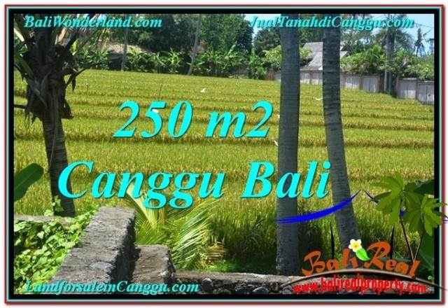 Magnificent PROPERTY Canggu Pererenan LAND FOR SALE TJCG207