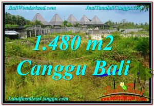 Magnificent PROPERTY LAND IN Canggu Pererenan BALI FOR SALE TJCG212