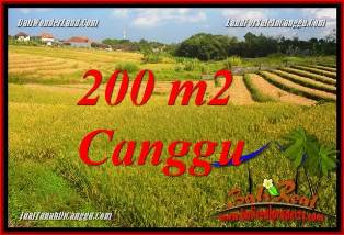 Magnificent 200 m2 LAND IN CANGGU BALI FOR SALE TJCG228